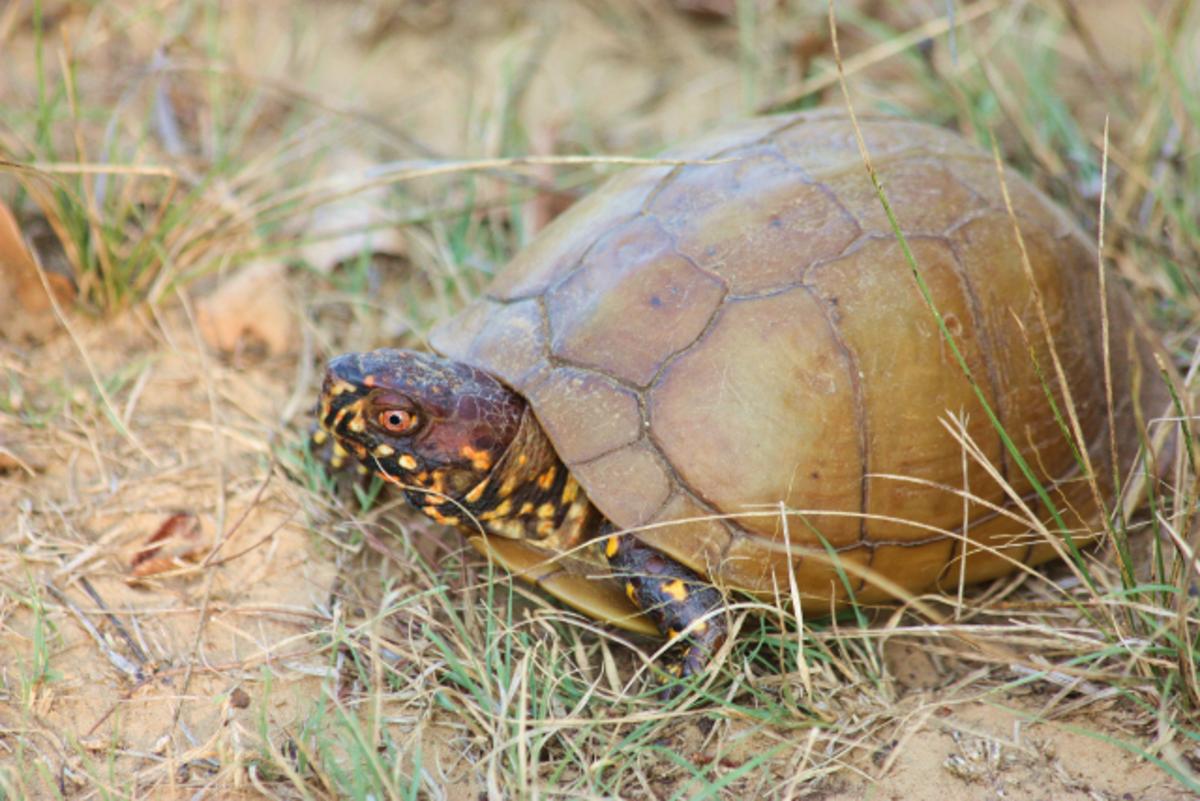 Tortoise I Found While on a Walk