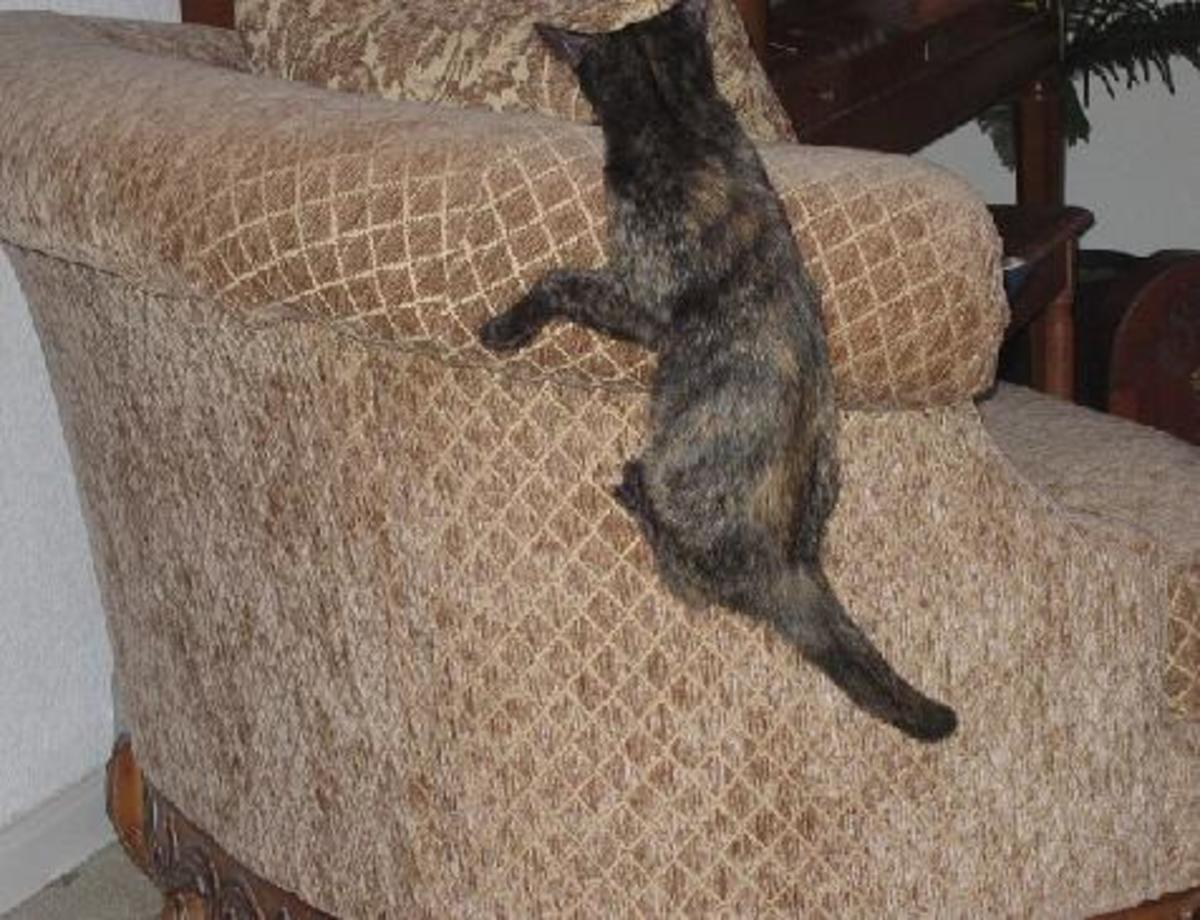 """This is not a naughty kitty at play no matter how much it looks like one.  This is a cat improving your home through """"tough love."""""""
