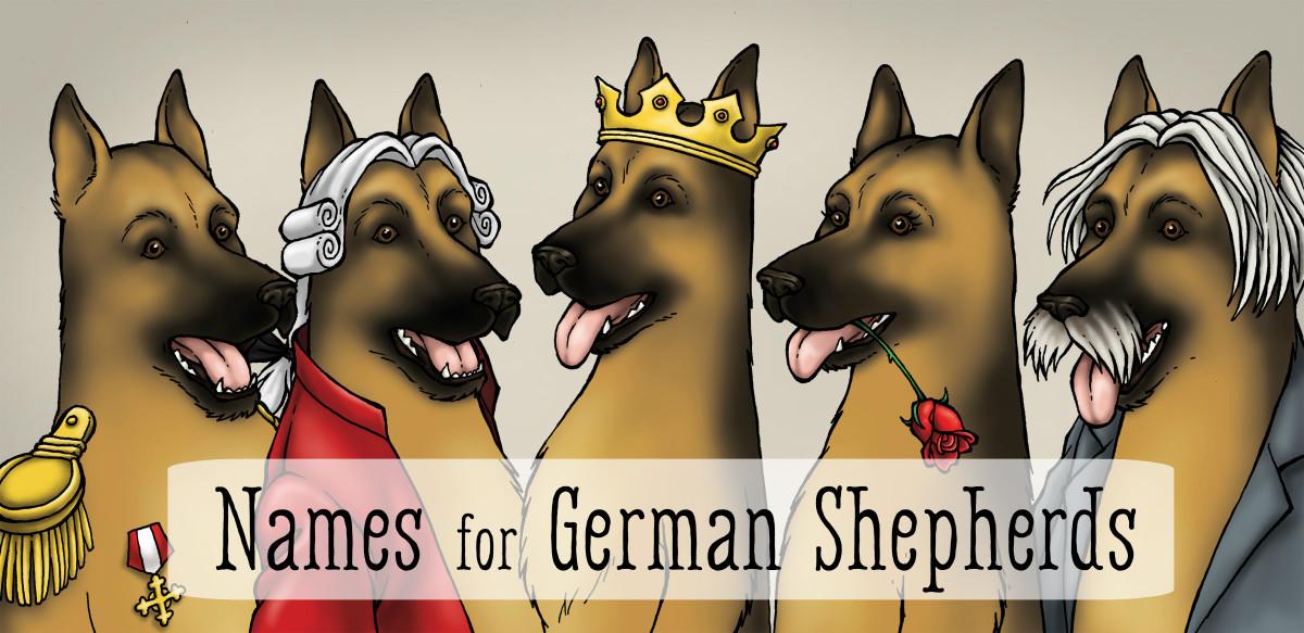 55 Best Dog Names for German Shepherd Puppies