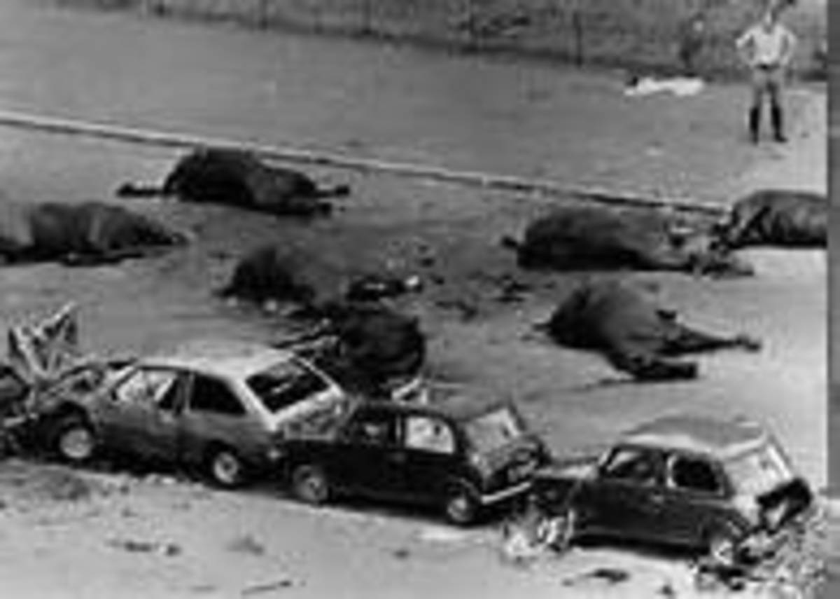 IRA bomb in Hyde Park London July 1982 eight soldiers killed together with seven Household Cavalry horses