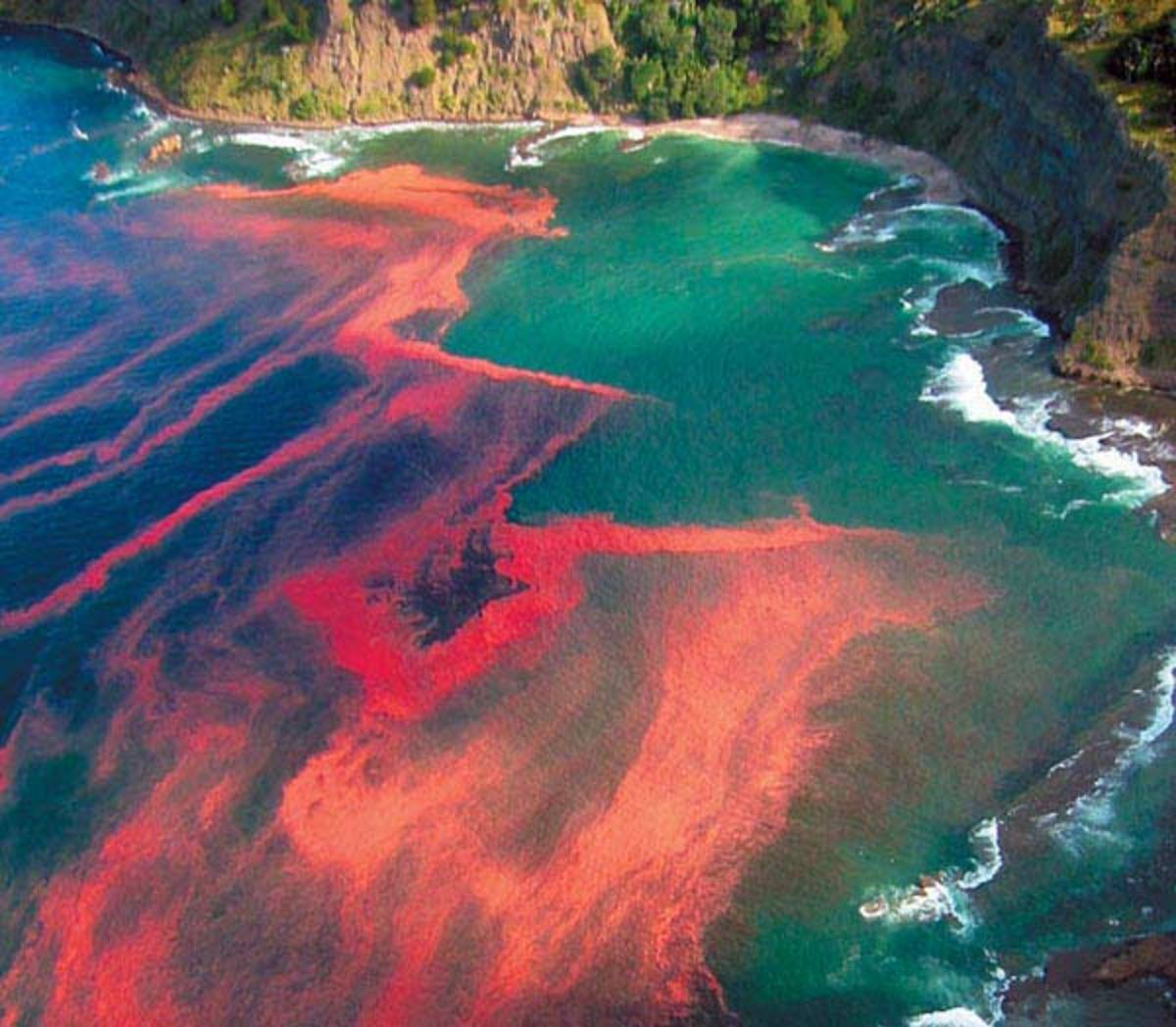 """""""Red Tide"""" and shellfish poisoning"""