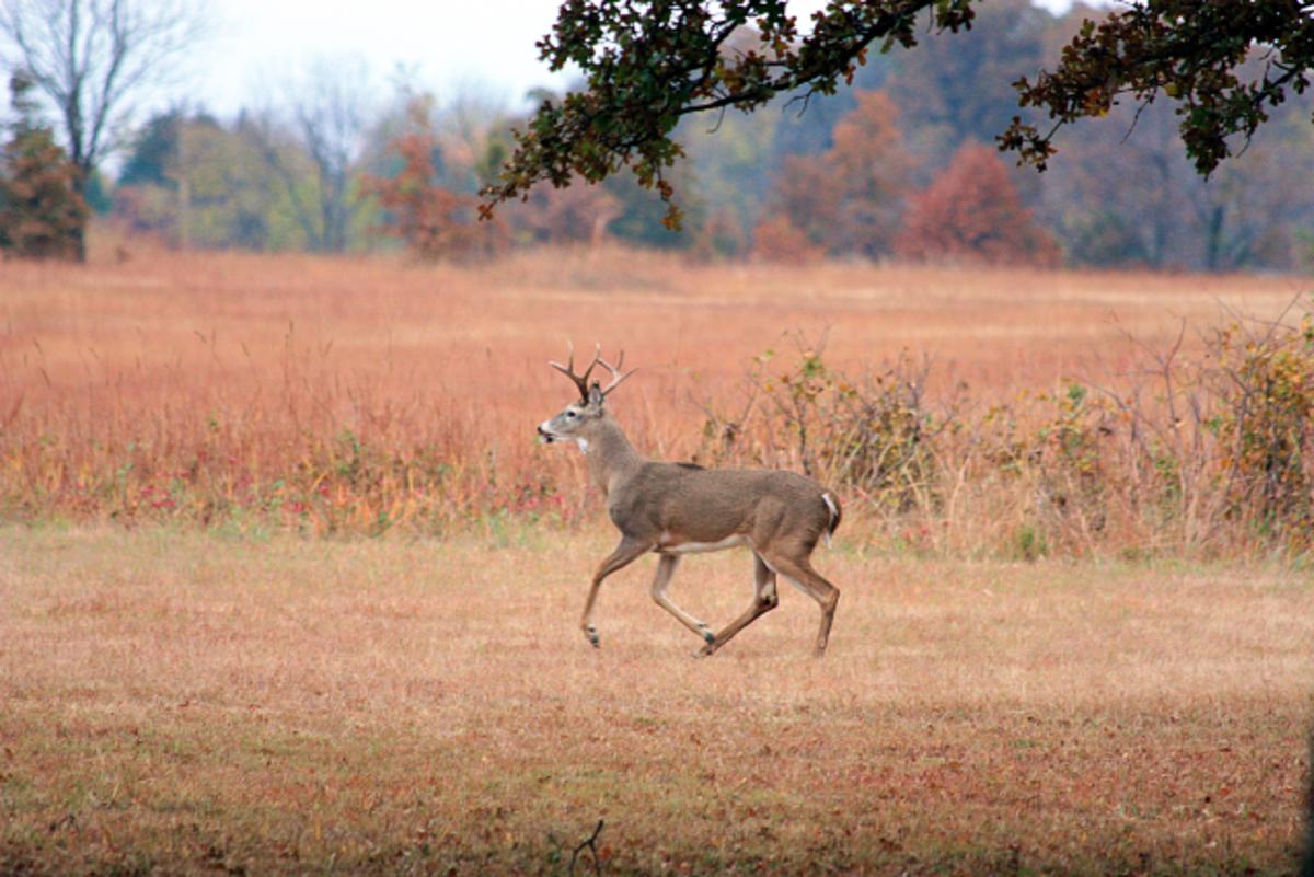 White Tail Buck Running Across my Front Yard