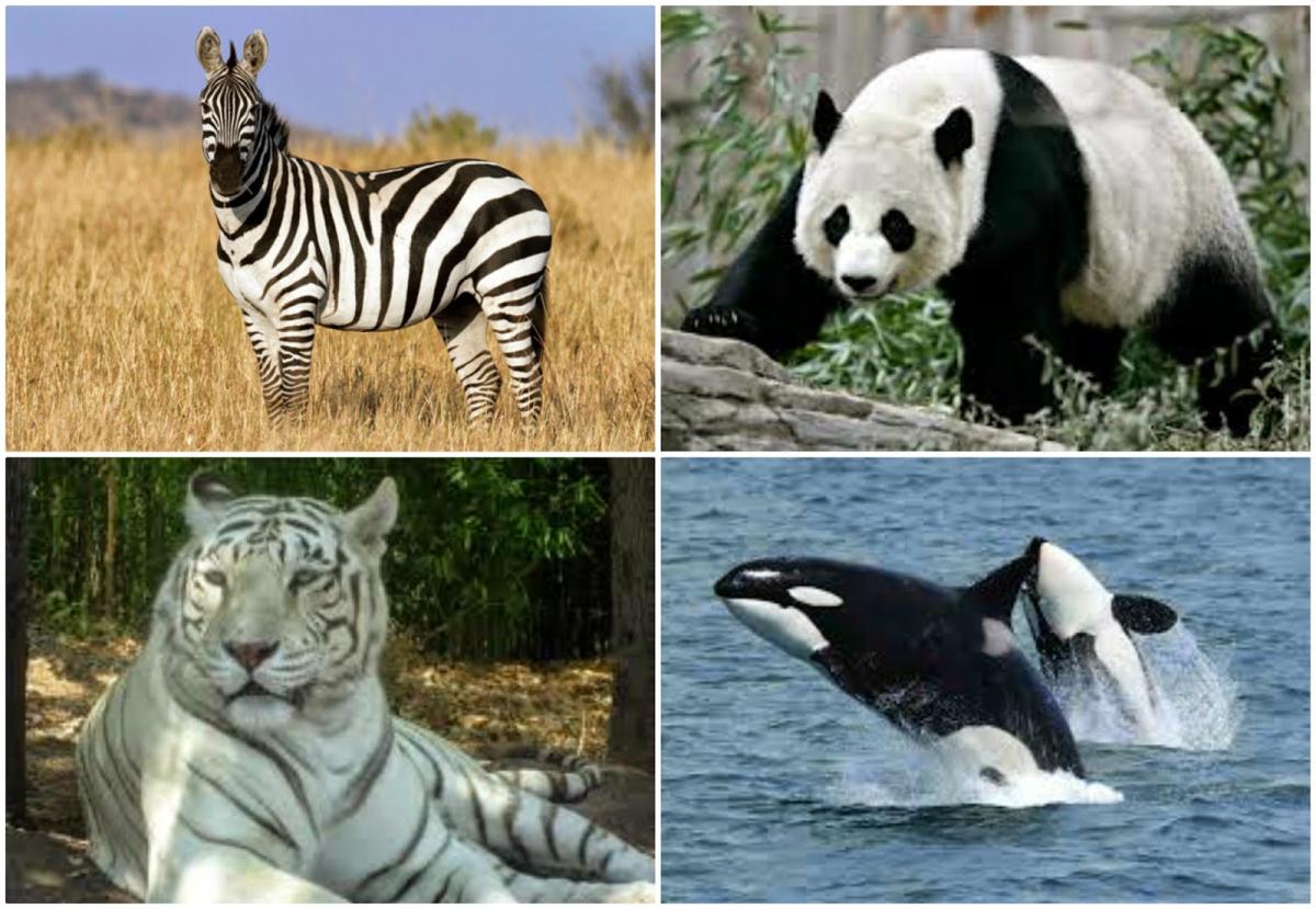 Animals using the animal instinct diet.