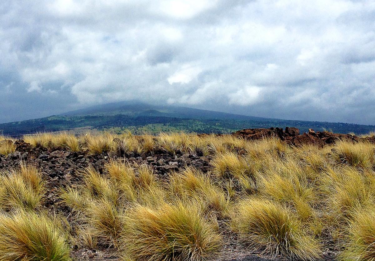 Diverse, unique climates – rain clouds on lush mountain top and bone-dry arid grasslands at sea level.