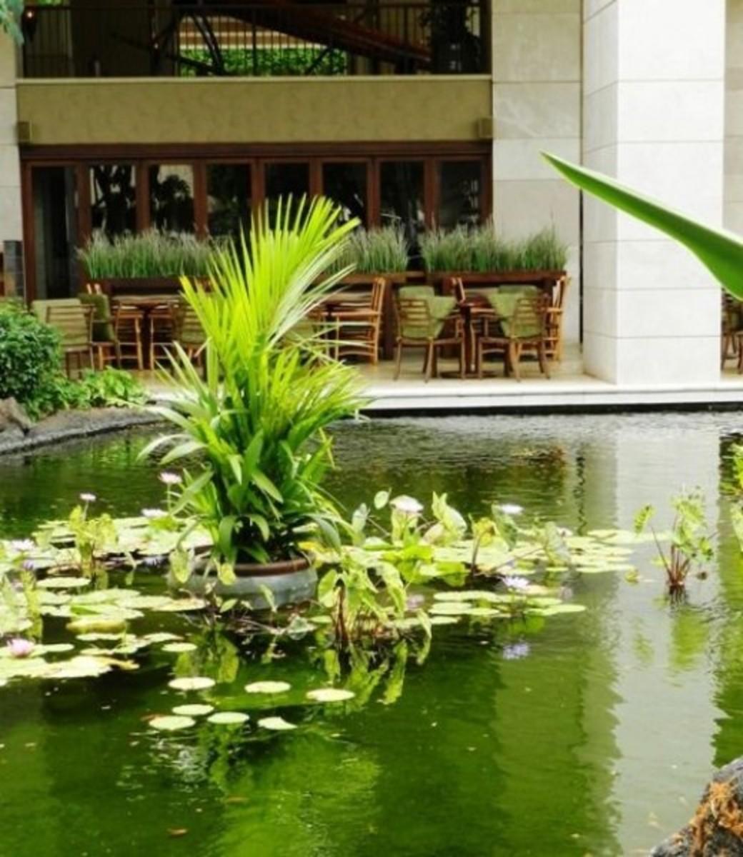 Koi pond and restaurant
