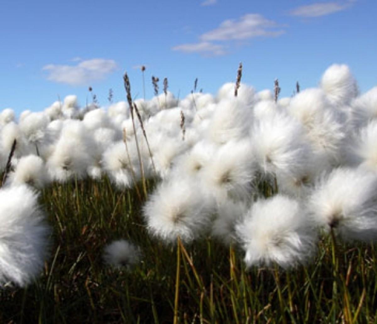 The Benefits of Organic Cotton