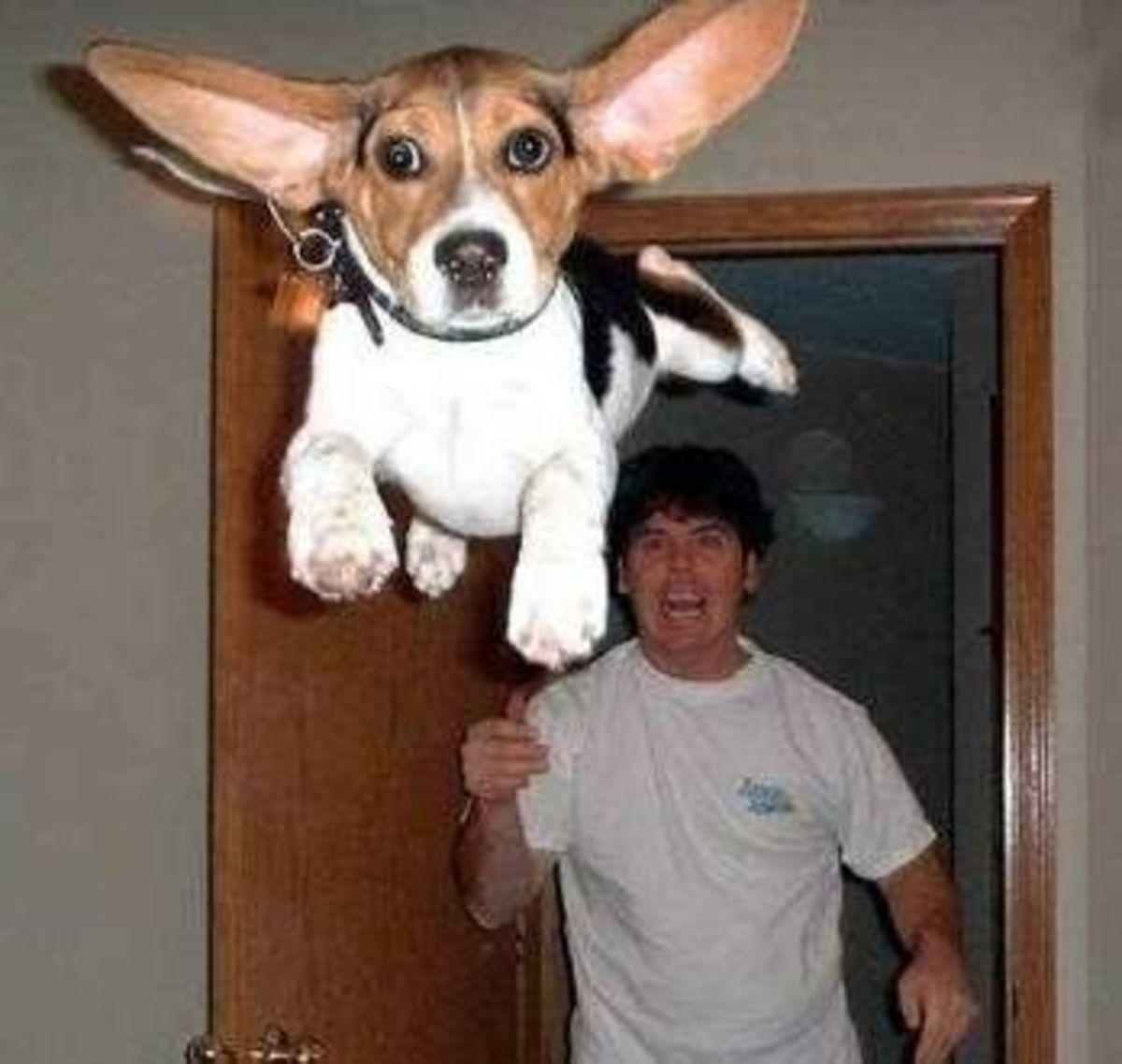 September 9th - Flying Dog