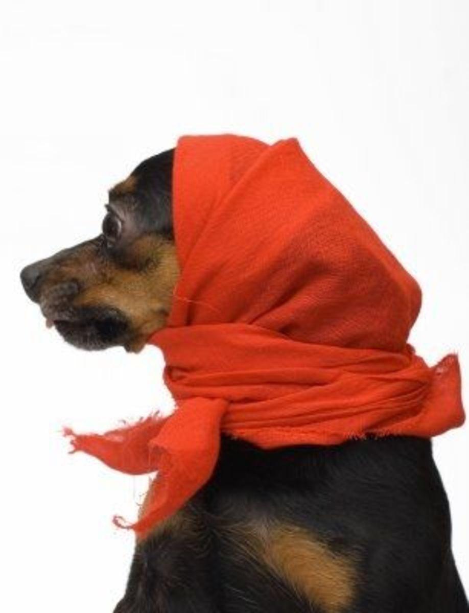September 16th - Little Red Riding Dog