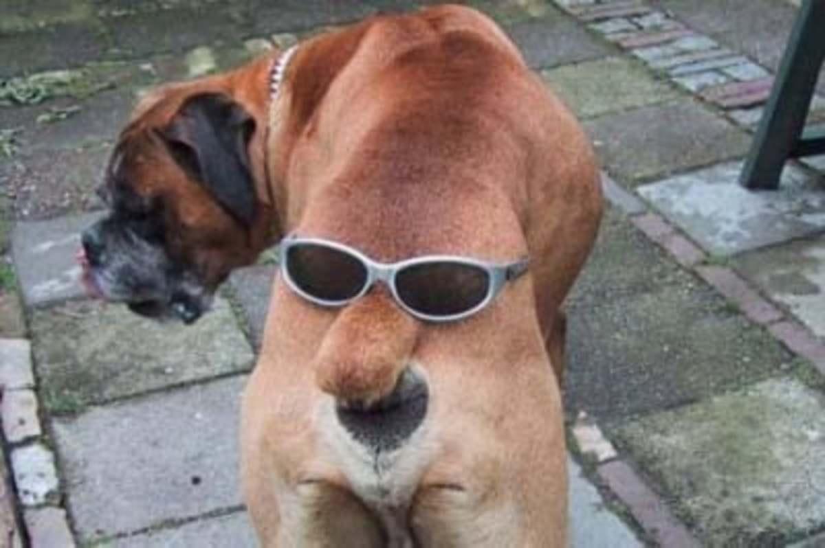 September 1st - Anyone Seen My Sunglasses?