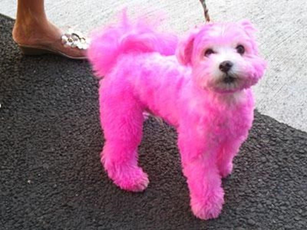 September 29th - Pink Pooch