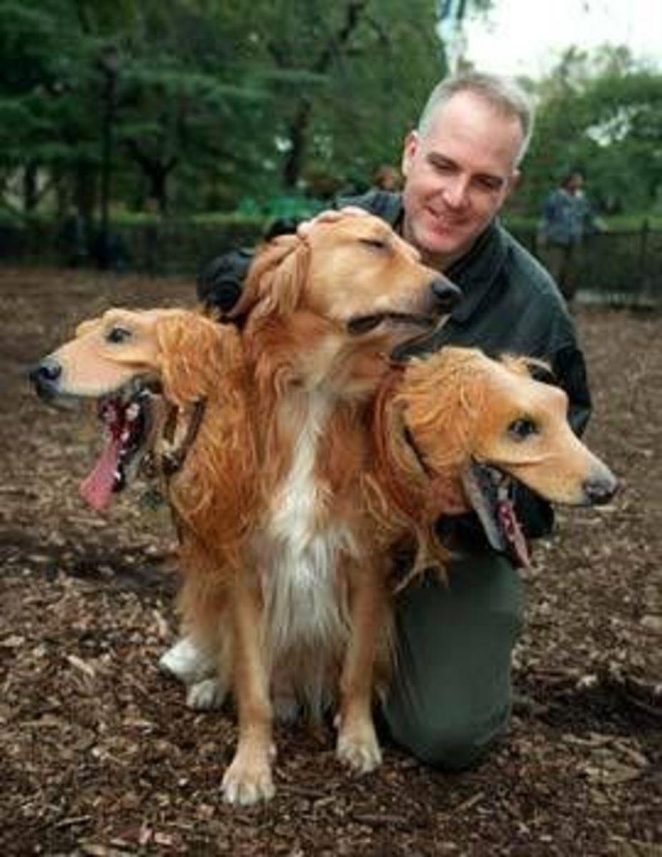 September 22nd - Three Headed Dog