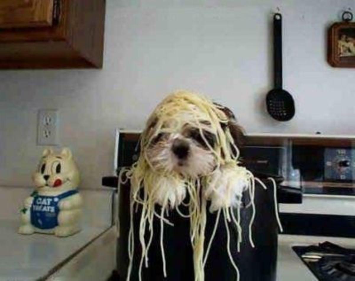 September 21st - Spaghetti Dog