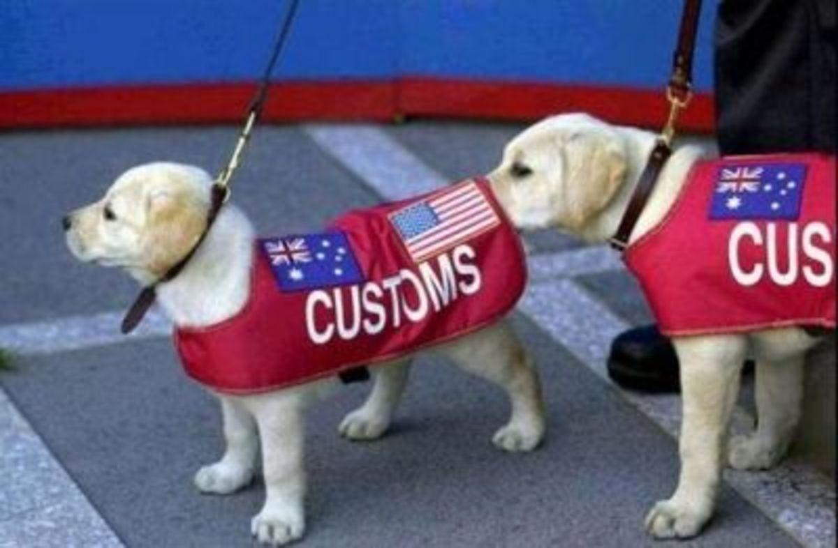 September 3rd - Sniffer Dogs