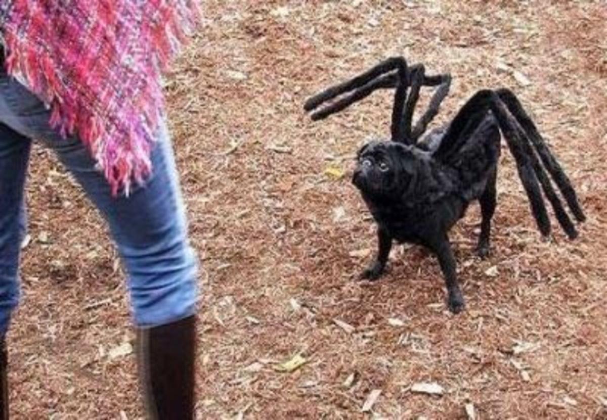 September 30th - Spider Dog