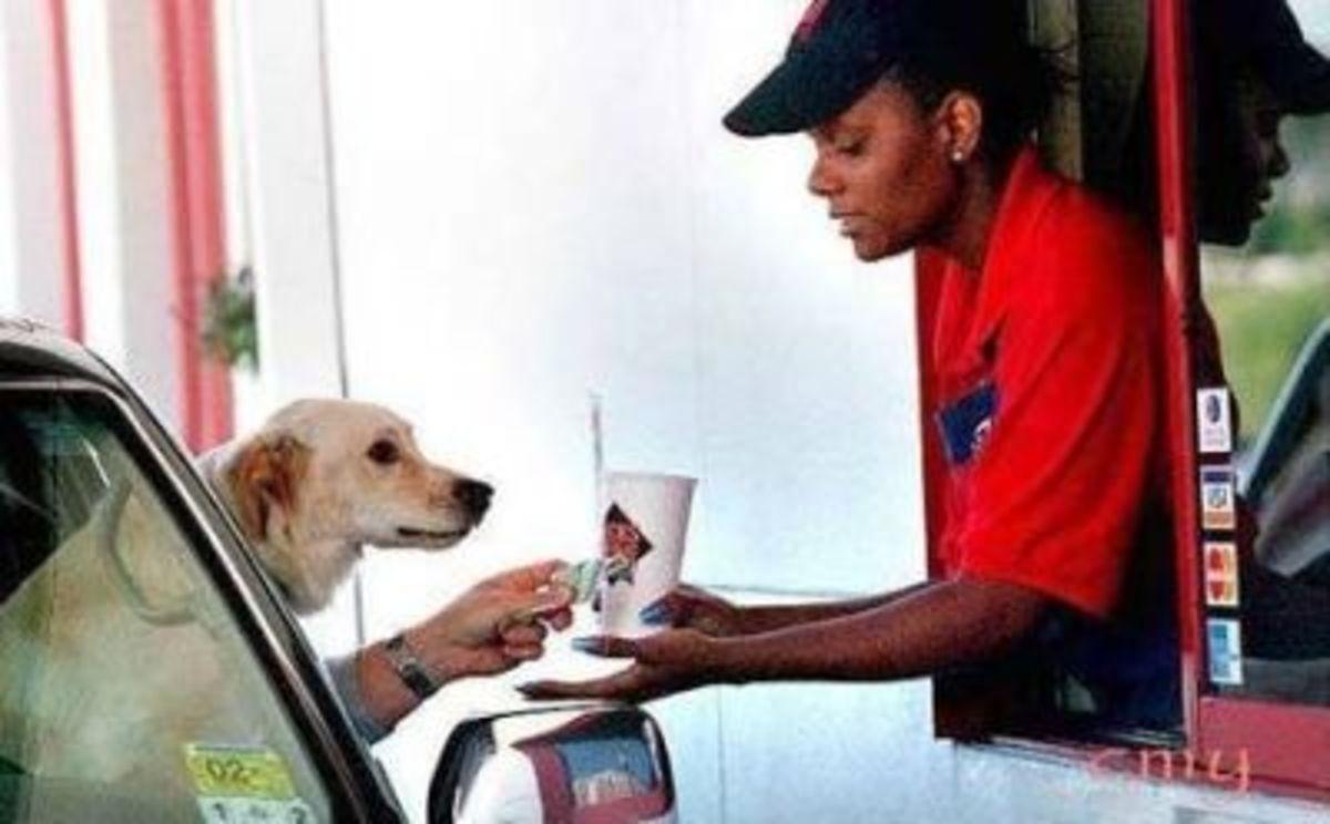September 6th - Doggy Drive Thru