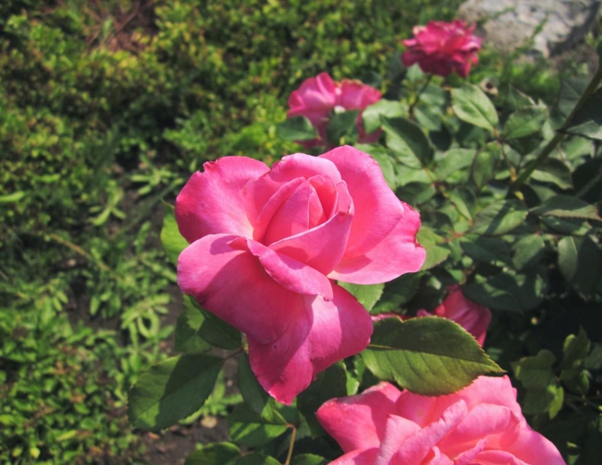 A precious flower in full bloom – a flower poem