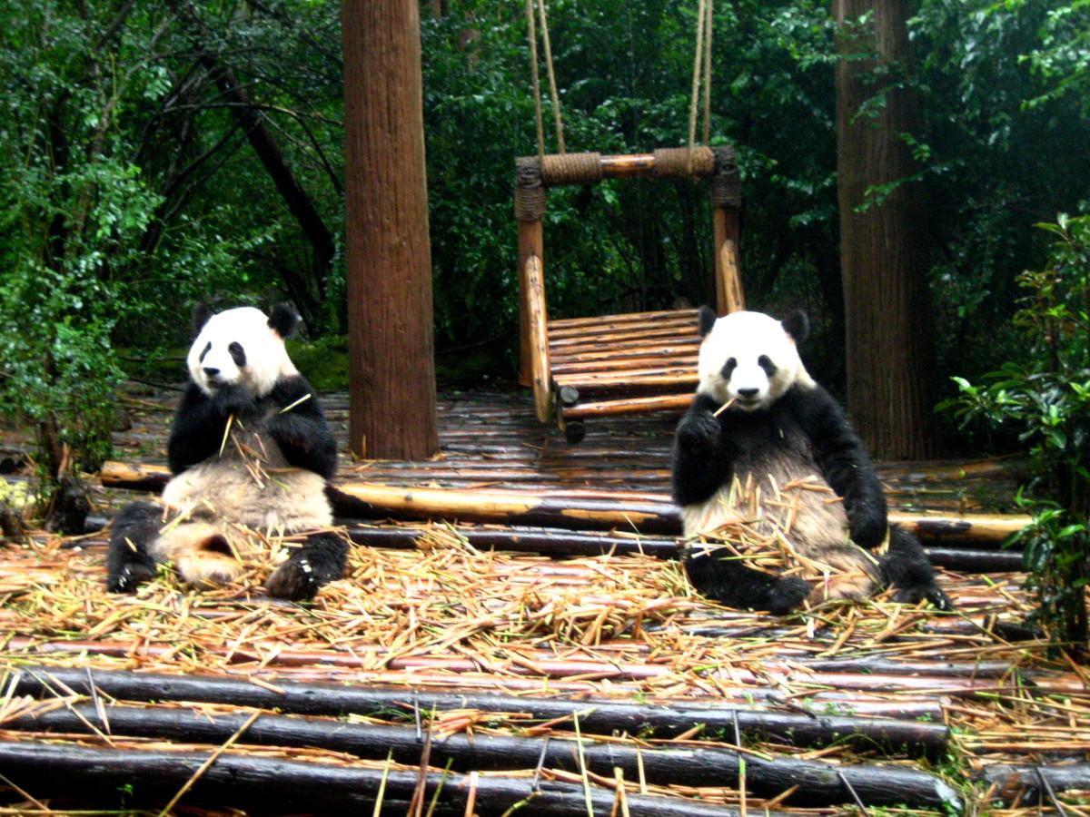 Buy Atlanta Zoo tickets and see giant pandas!