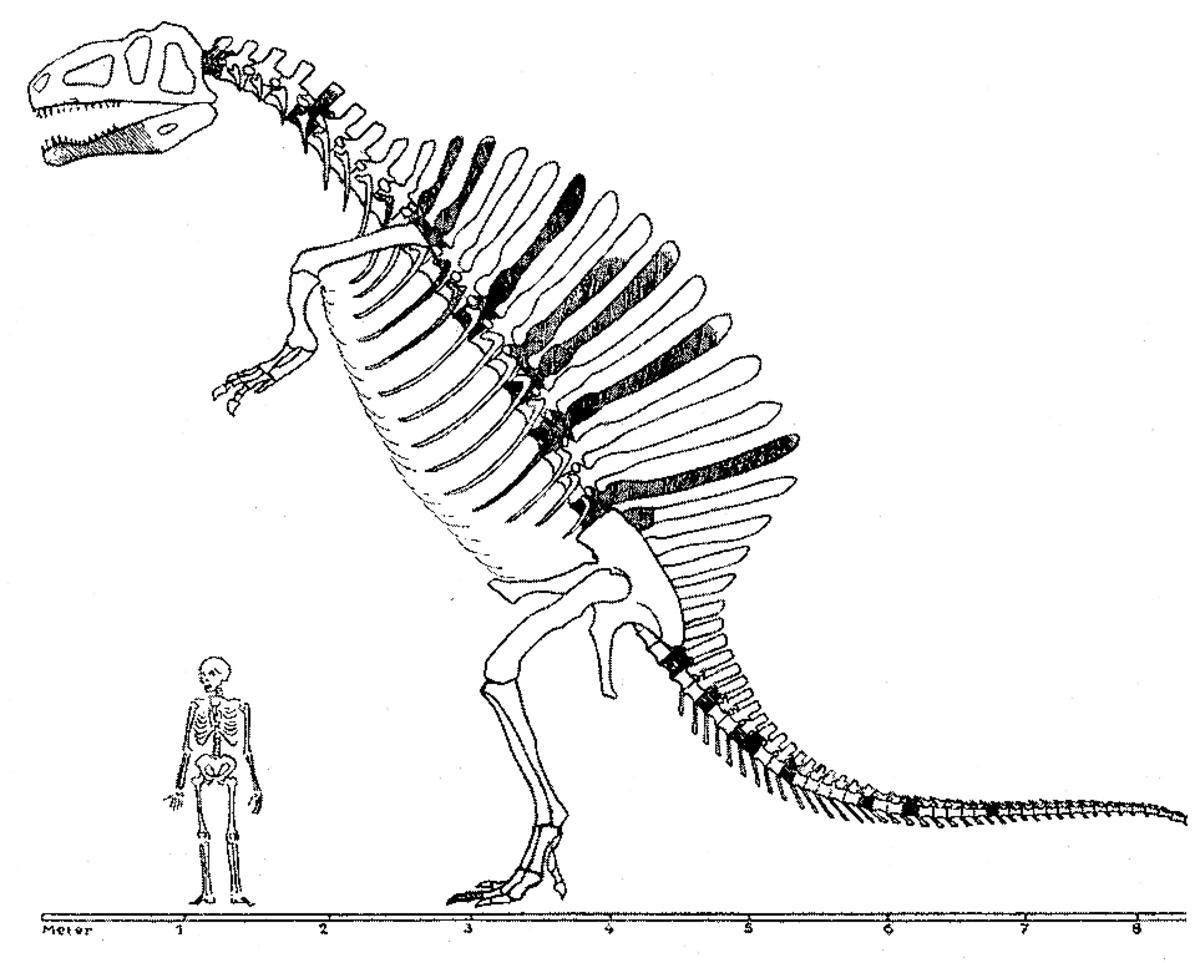 Stromers original depiction