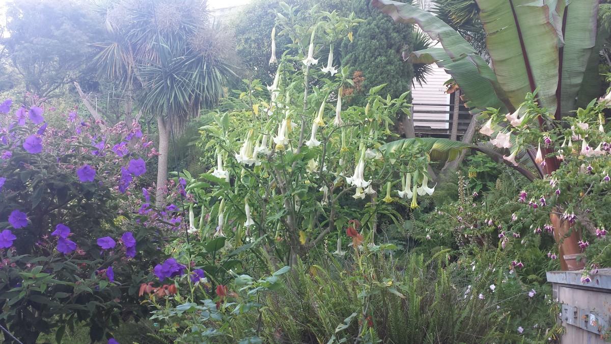 Filburt Street Step Gardens