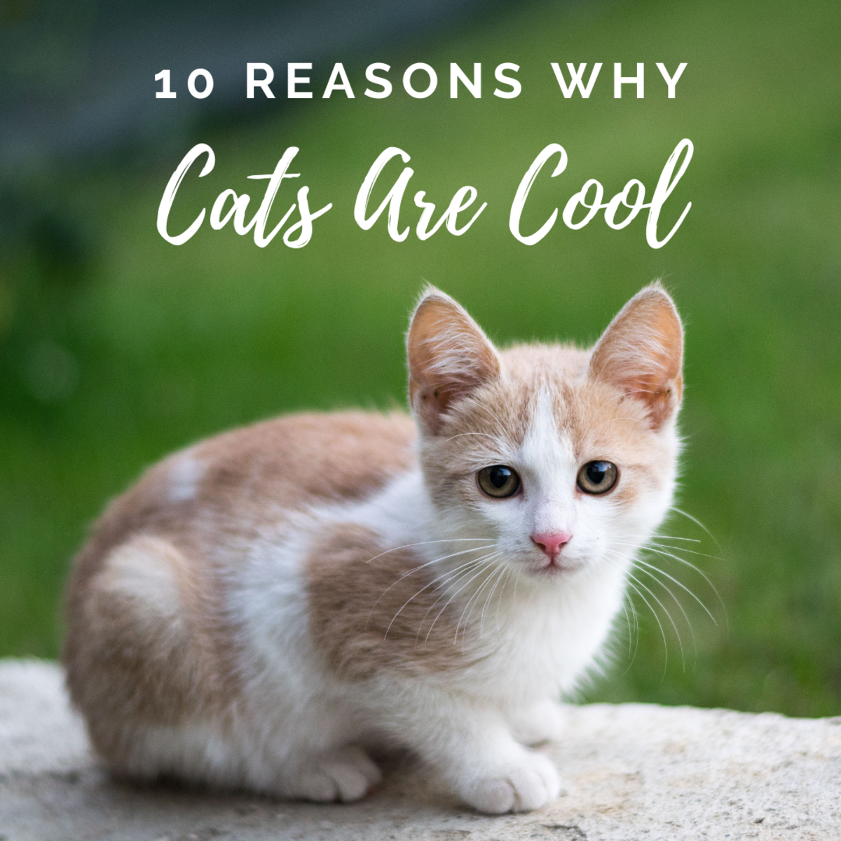 10 reasons why cats are awesome, amazing creatures