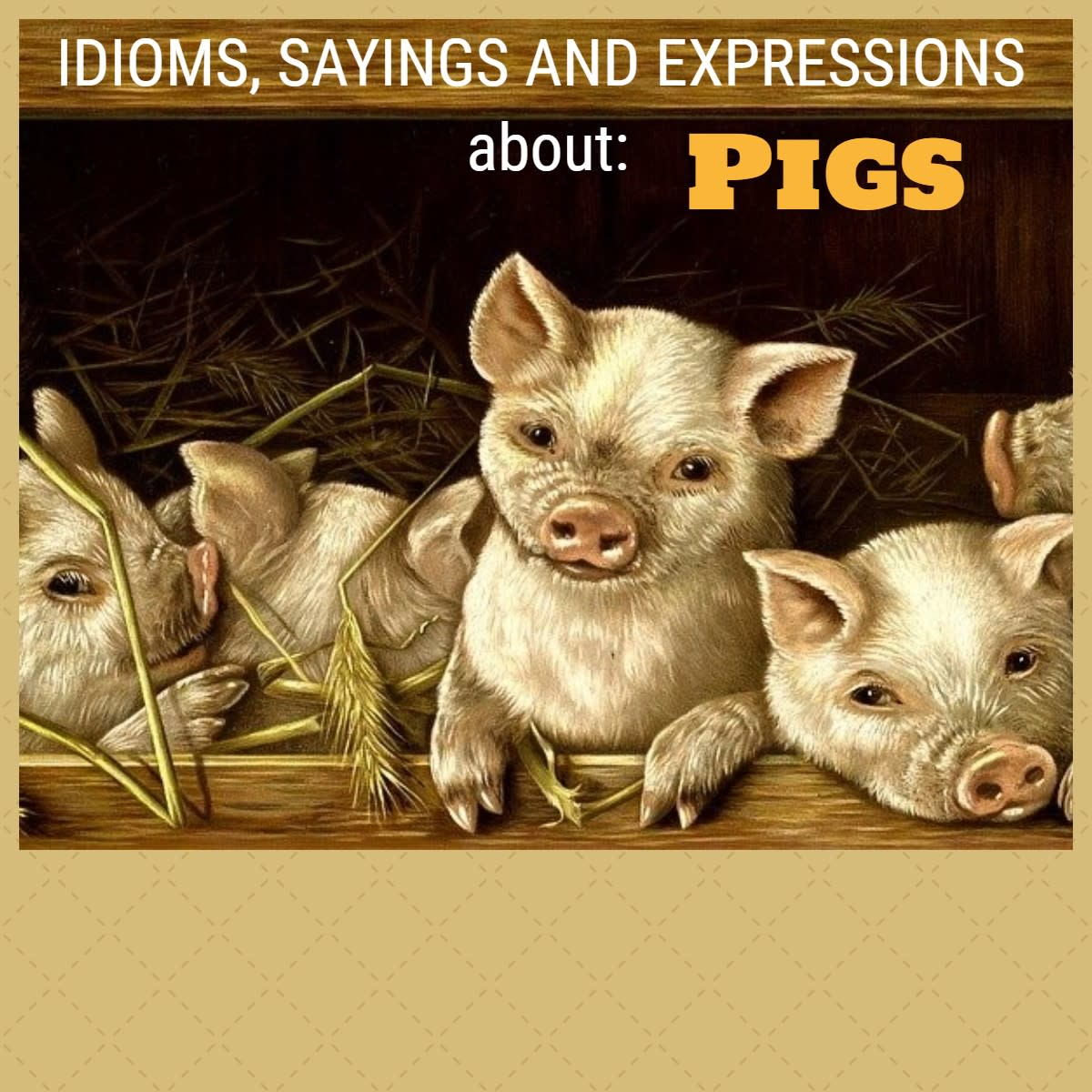 Pig Idioms and Phrases
