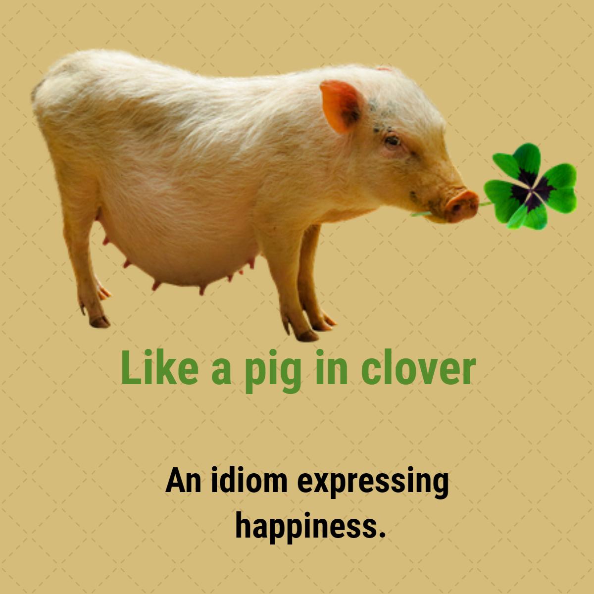 pig-idioms