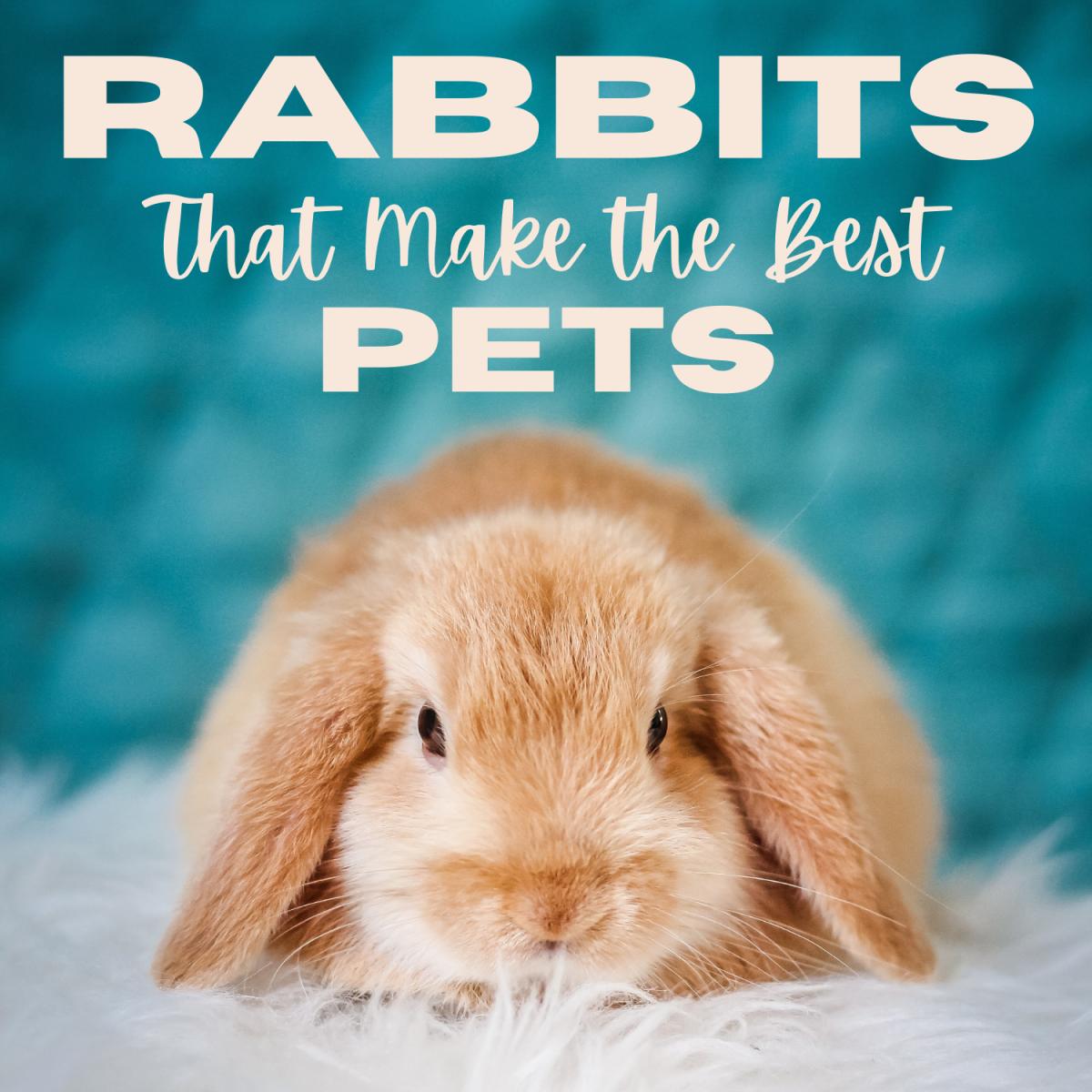 15 of the Best Pet Rabbit Breeds