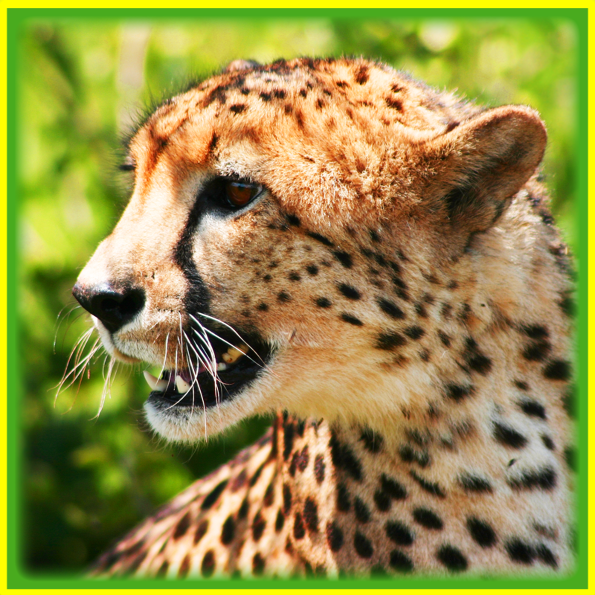 Relative Top Speeds of Common Land Animals: Is the Cheetah Really the Fastest?