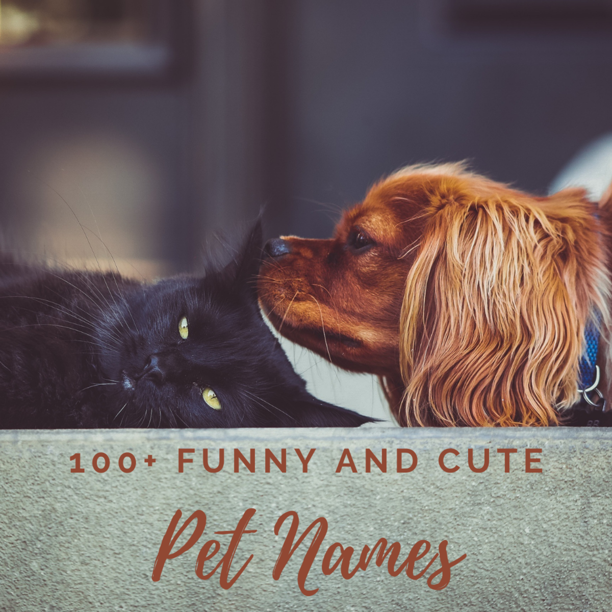 100+ creative, funny, and adorable pet names