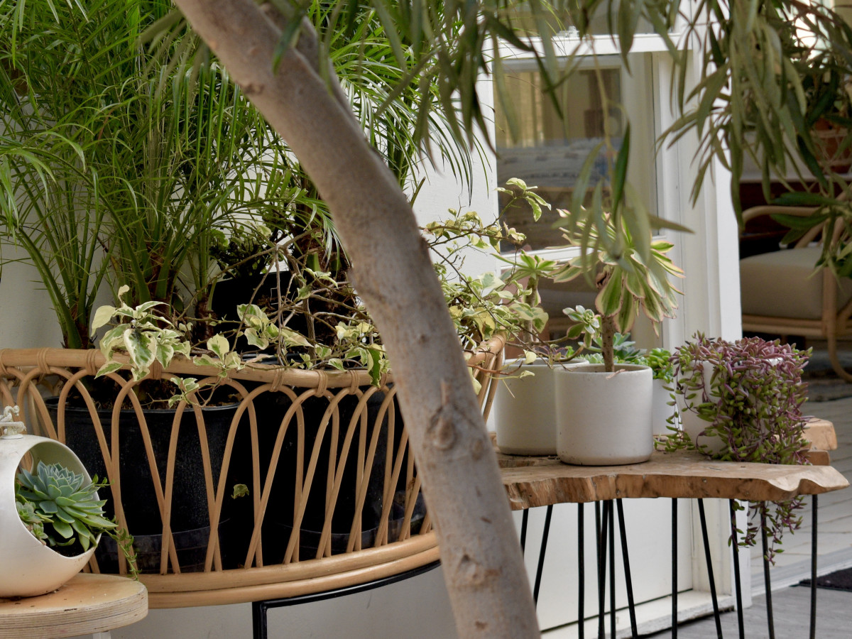 Although they grow biggest and healthiest outside in their natural environment, low-light plants can survive decently indoors if they are placed well and taken care of properly.