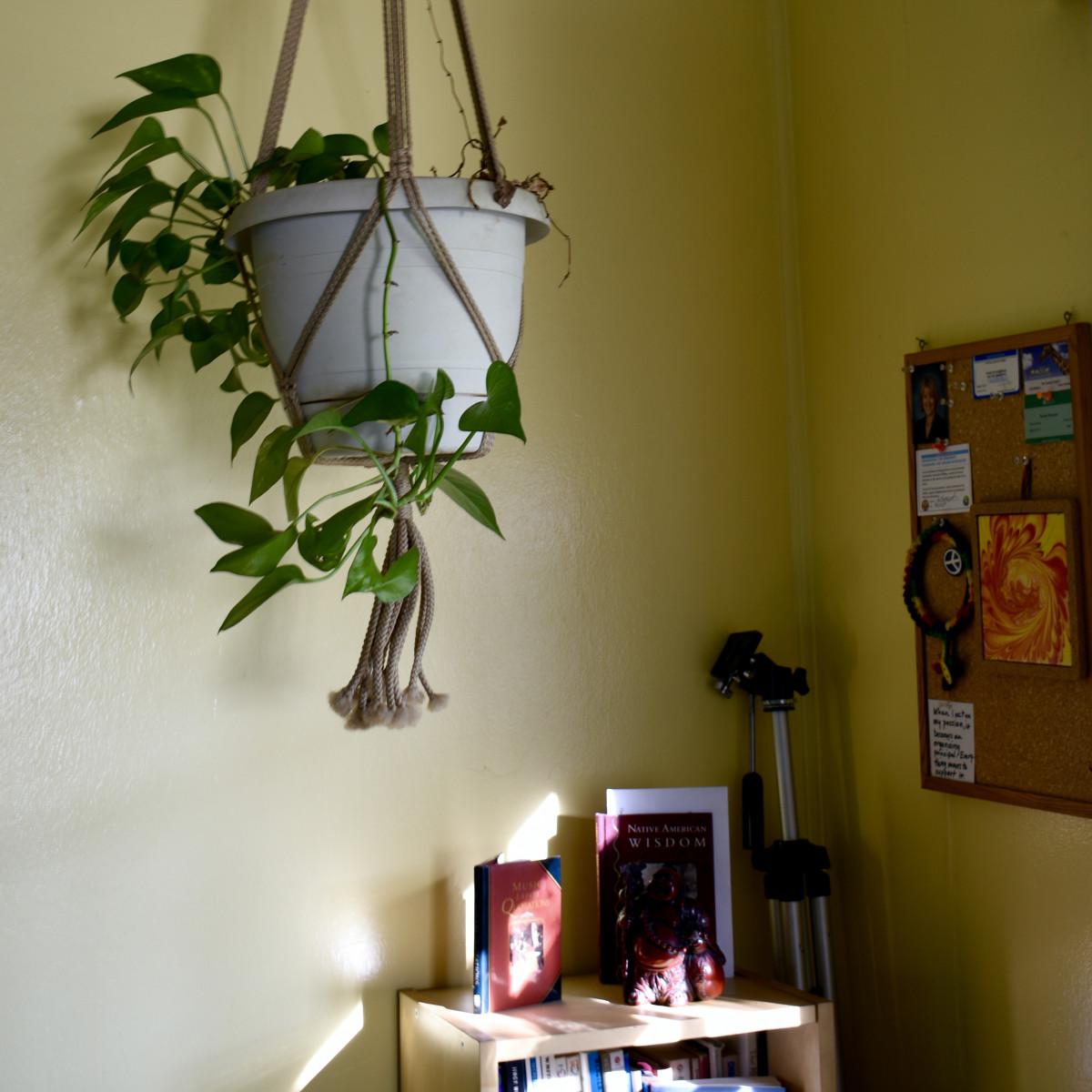 This is the brightest this corner gets during the day. Notice how all the leaves are facing away from the window. They're getting their light elsewhere. Notice also that there's not much coloration on the leaves. That also reflects the lack of light