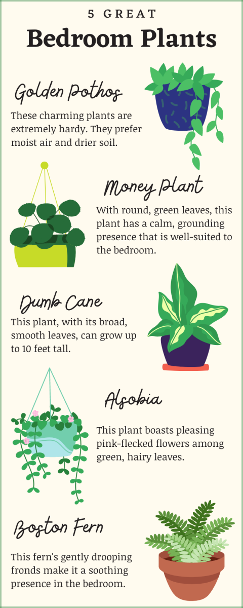 While some plants can look and feel right in a bedroom, here are a few reasons to consider putting plants in every part of your house *but* the bedroom.