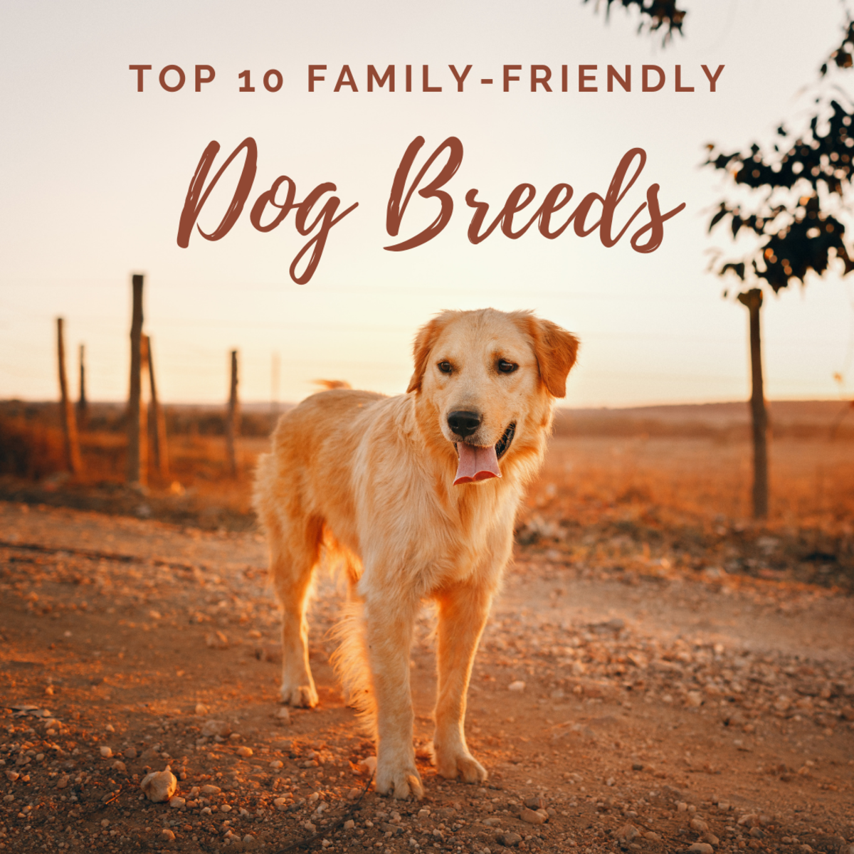 10 cute and family-friendly dog breeds