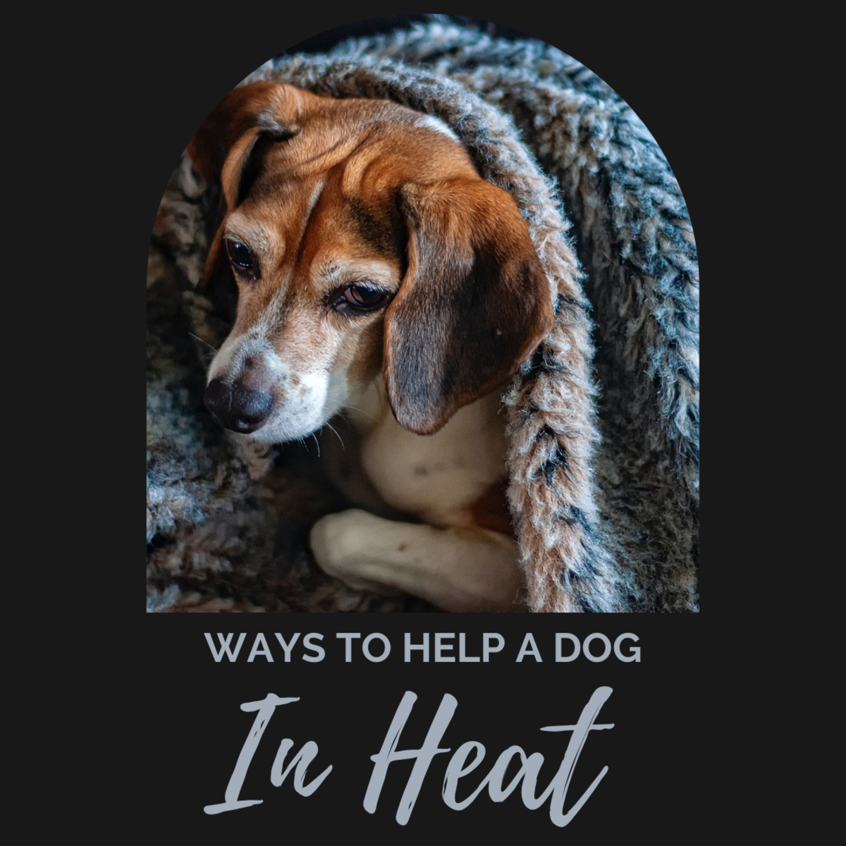 How can you help a dog in heat?