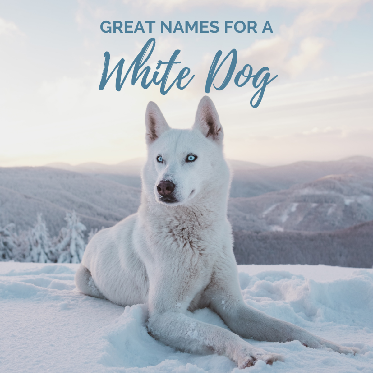 What should you name a white dog?