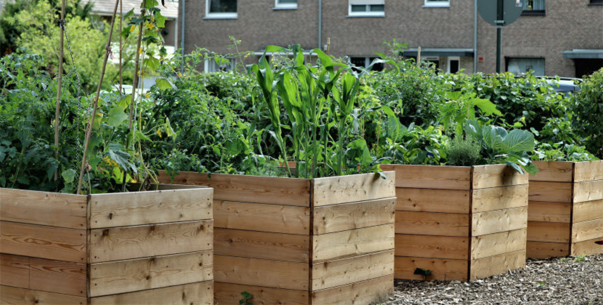 how-to-make-gardening-easier-my-9-top-tips