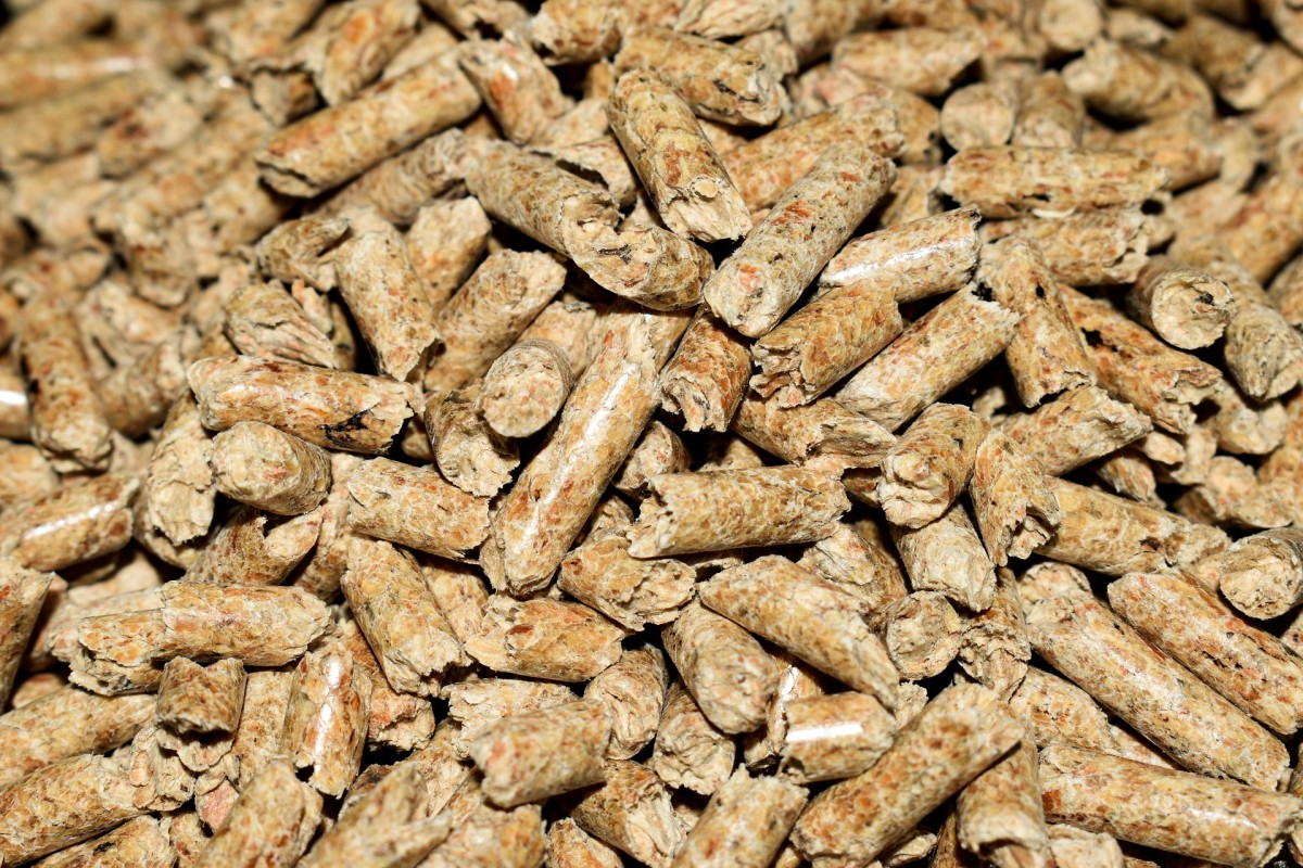 Wood stove pellets make the best litter for ferrets, hands down!