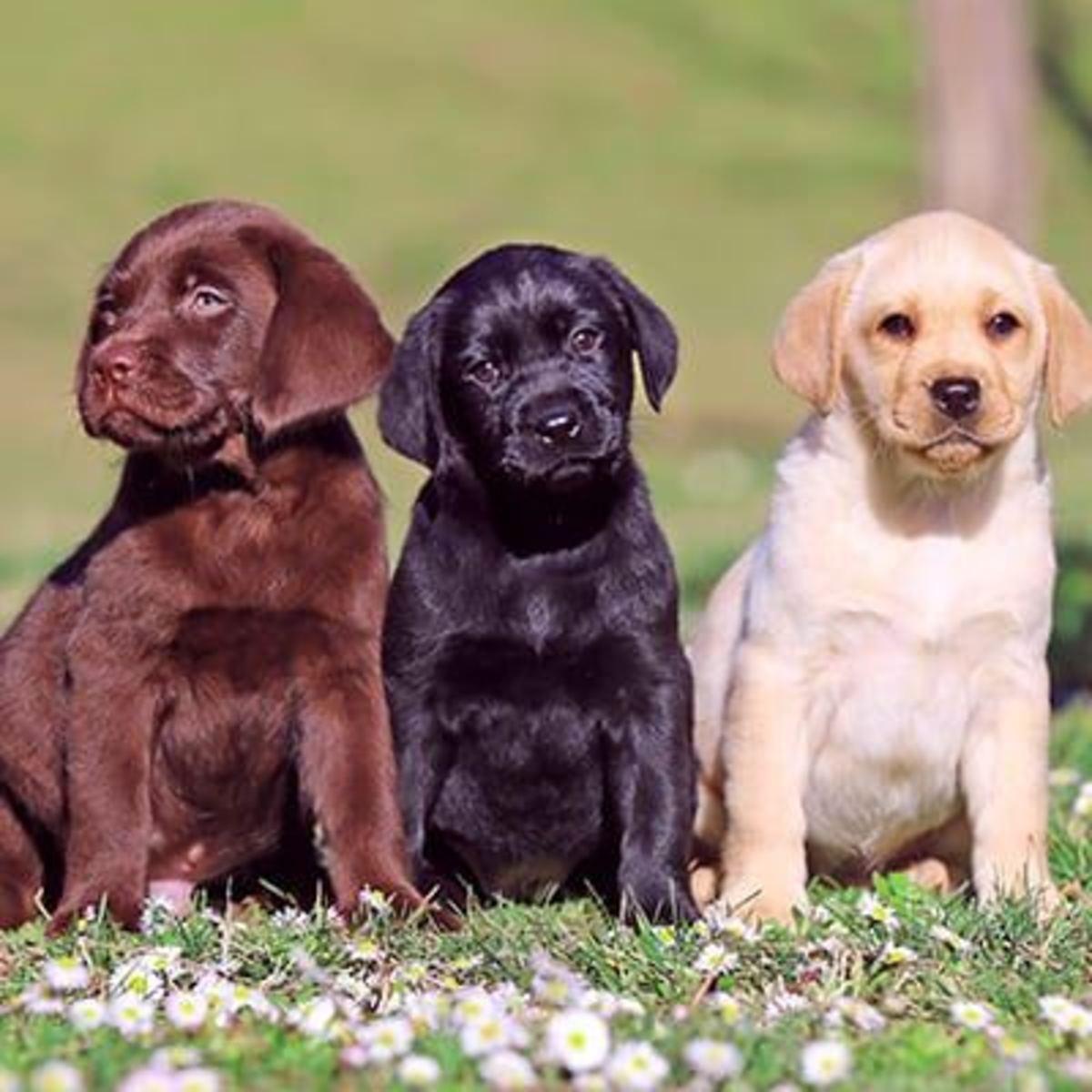 las-6-mejores-razas-de-perros