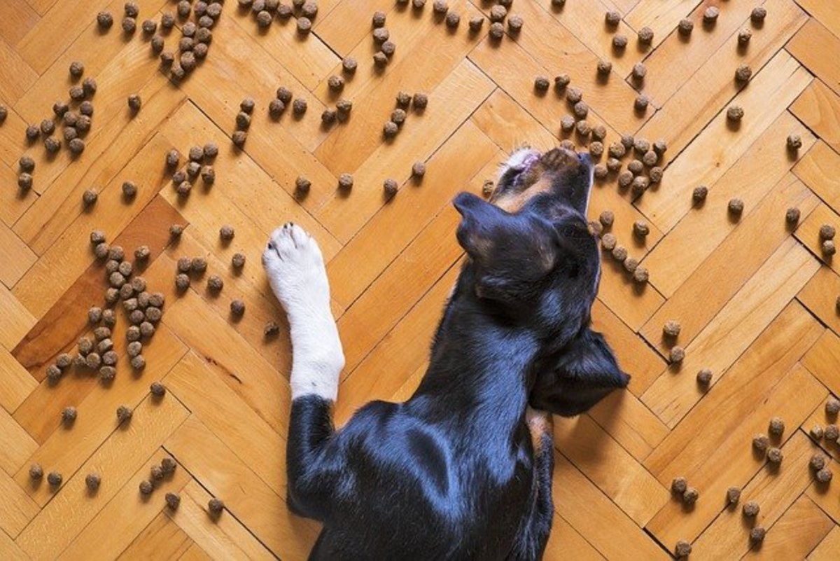 how-to-stop-a-dog-from-eating-fast