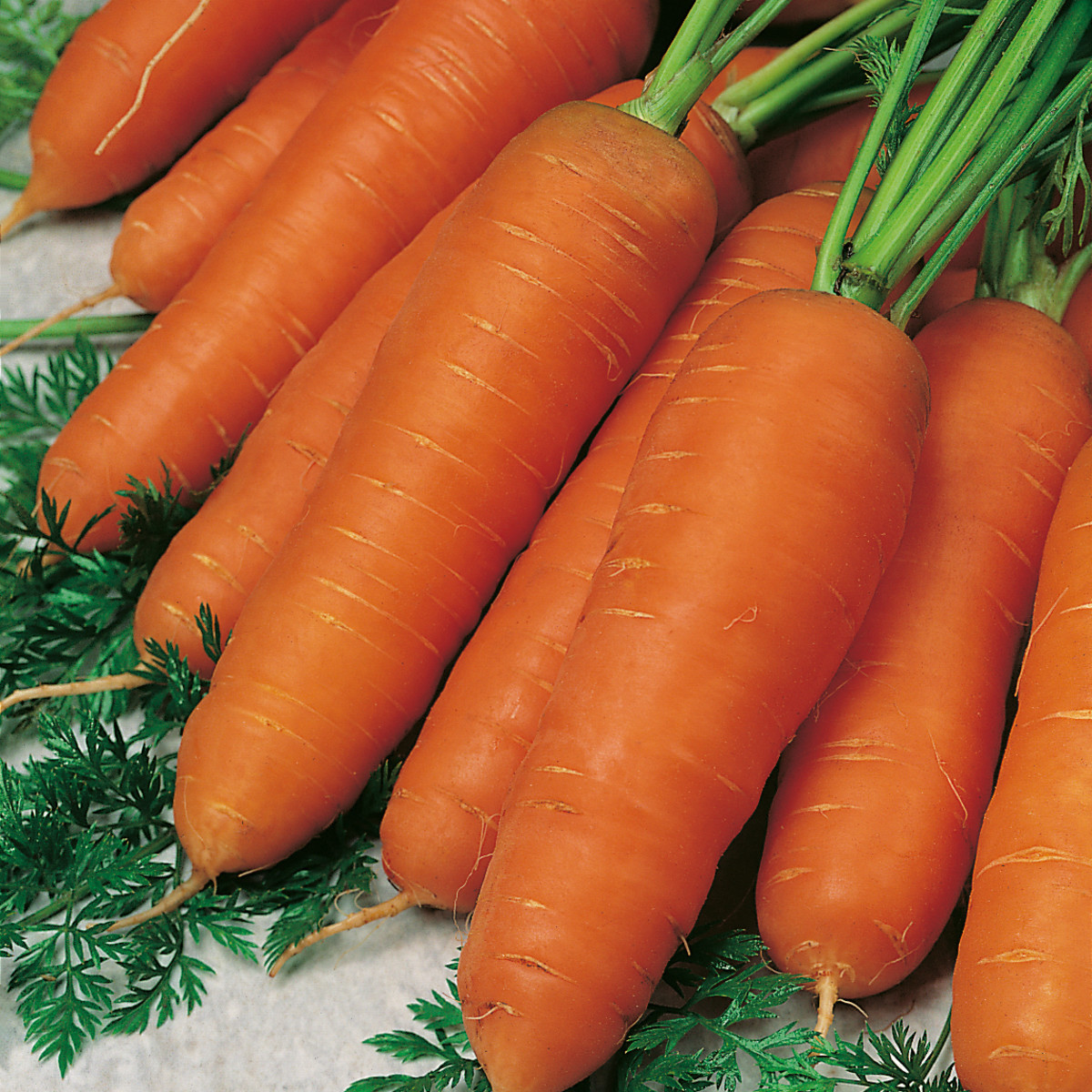 Everything You Need to Know About Carrots: The Perfect Health Food