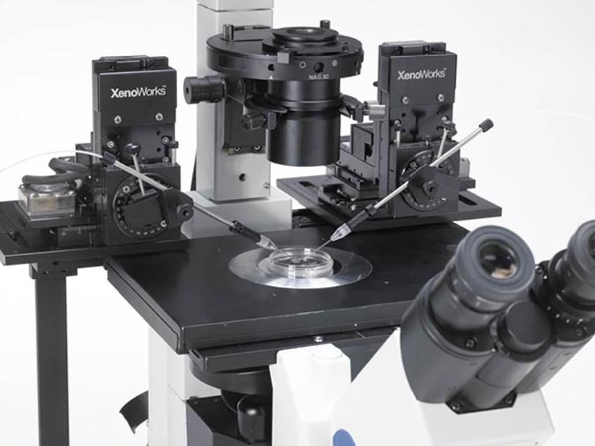 Microinjection Setup