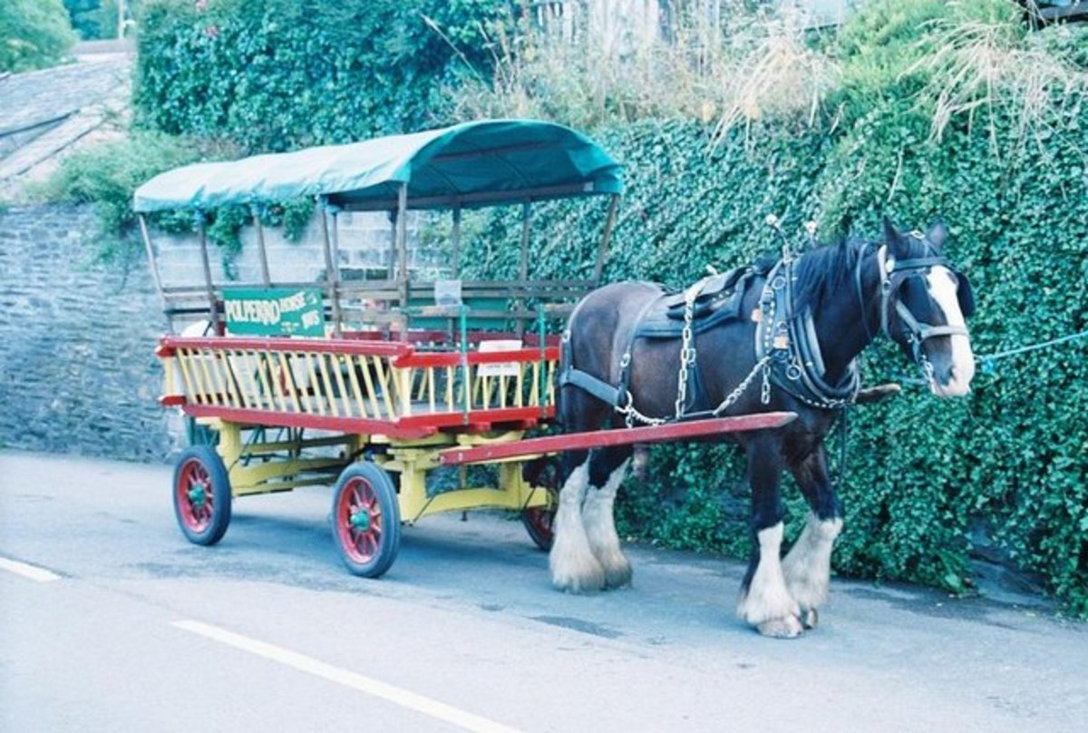 Polperro Horse Bus, Cornwall