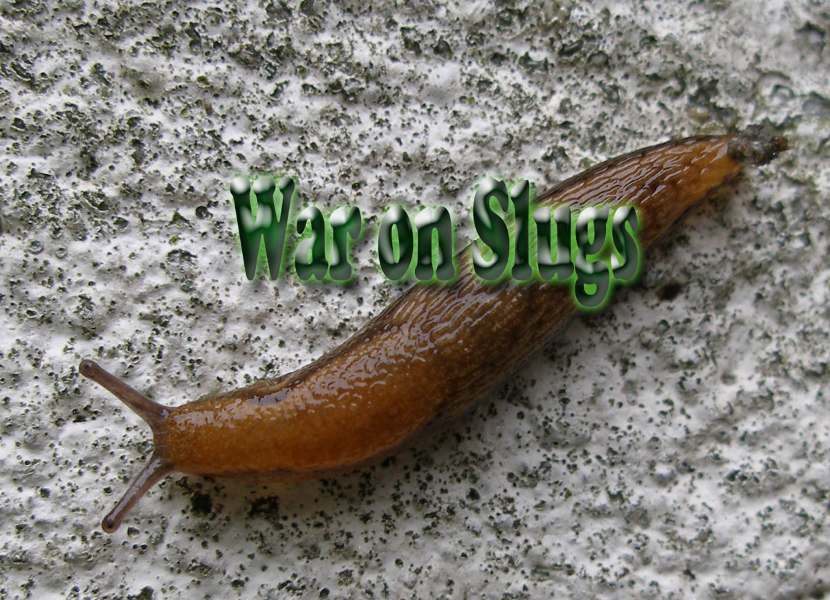 War on Slugs
