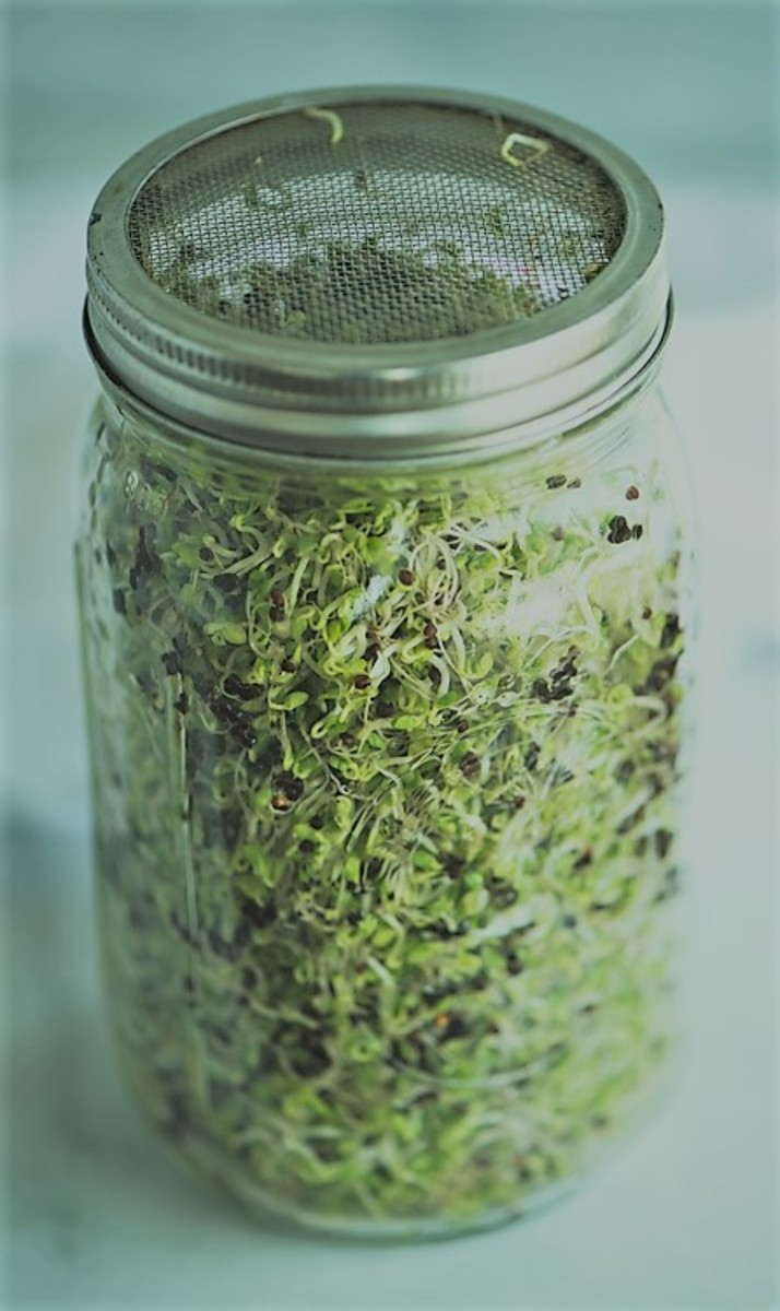 Sprouting jar with mesh lid