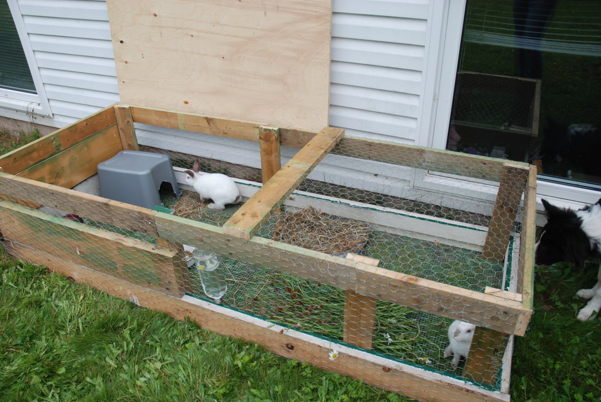 Raising Rabbits for Meat: An Urban Farming Guide for ...