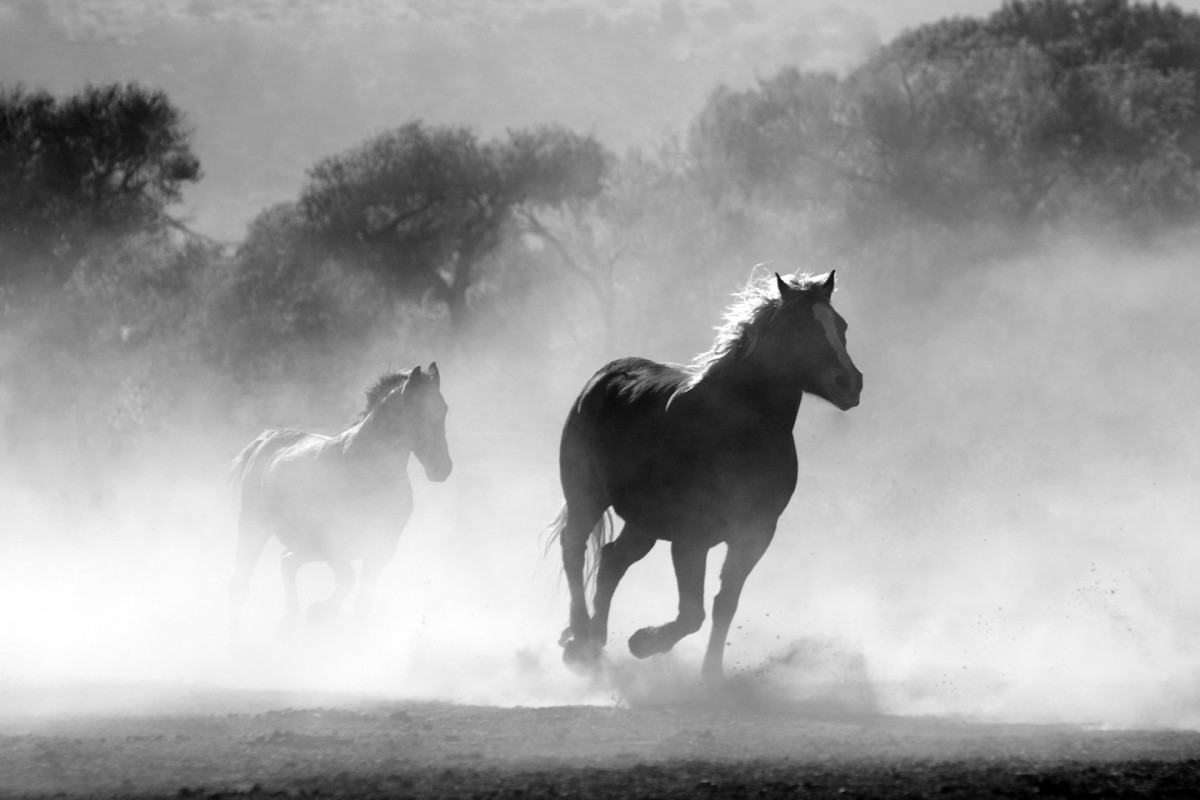 Unbridled horses were galloping amok everywhere in desperate panic.