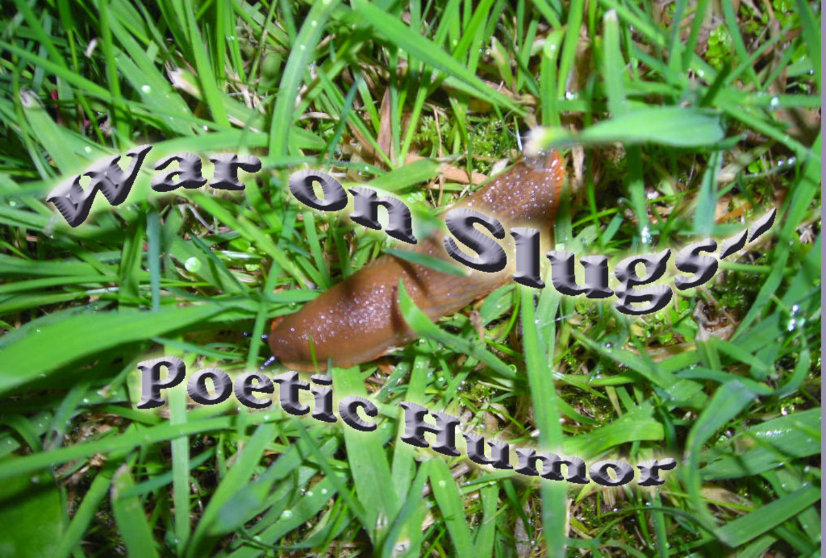 war-on-slugs