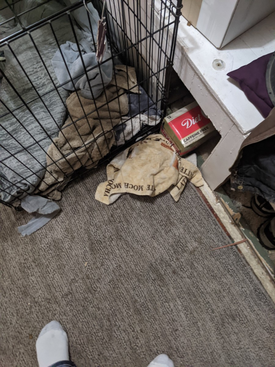 labrador-retriever-food-hiding-behavior