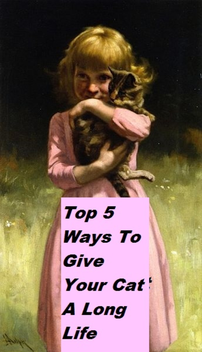 Top Five Ways To Give Your Cat A Long Lifespan