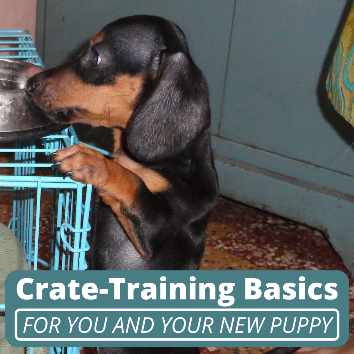 Crate training your puppy as soon as possible could spare them from unnecessary stress and anxiety down the line.